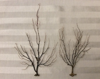 Brown Sea Fan Branches (set of 2)