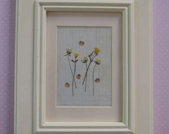 Pressed Wild Flowers picture