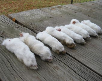 B Quality Dried White Rex Rabbit Feet