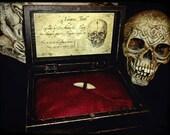 Vampire's tooth in wunder...
