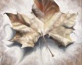 Leaf Art Print, Botanical...
