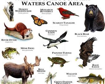 Wildlife of the Boundary Waters Canoe Area