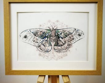 Print of a drypoint etching of a moth and mandala