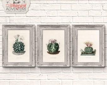 Antique Cactus Illustration, Set Of 3, Printable Vintage Botanical Book Pages, Instant Download Wall Art, Home Decor, Digital Collage Sheet