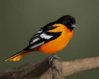 Baltimore Oriole — Giclée print of original painting (authenticated and signed by artist)