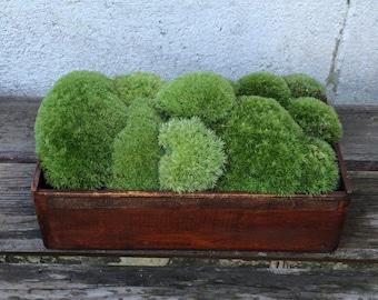 Moss, Cushion / Pillow Moss, Craft Supplies, Terrariums, Wreaths, Woodland Wedding, Organic, Fairy Garden, Reptile Habitat, Moss Bath Mat