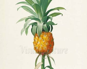 Pineapple Botanical Print, Pineapple Art Print, Wall Art, Fruit Art, Fruit Print, Kitchen Art, Garden, Redoute Art, Bromelia Ananas