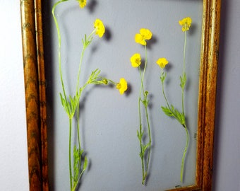 Clear Framed Yellow Pressed Flowers