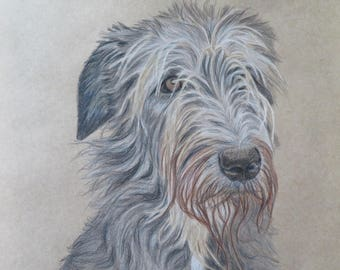 "Drawing Irish Wolfhound 7,8 x 7,8"" Original ColorPencil Drawing / ArtbySandraZereike"