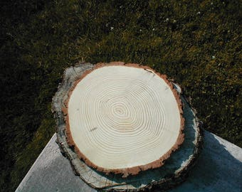 "14"" to 16"" Wide Pine Wood Slices  1 1/4""  Wood Slice, Log Slice, Tree Slice, Wedding Centerpiece, Wedding Decor, Home Decor,  Season Decor"