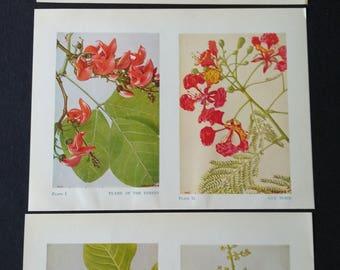 9 Vintage Botanical Indian Flowers Pages Ephemera Scraps 1950's Scrapbooking, Collage, Paper Crafts, Junk Journalling