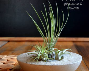 Concrete planter - bath