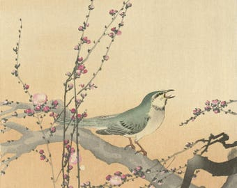 "Japanese Art Print ""Songbird and Plum Blossom"" by Ohara Koson, woodblock print reproduction, fine art, asian art, cultural art, blossoms"