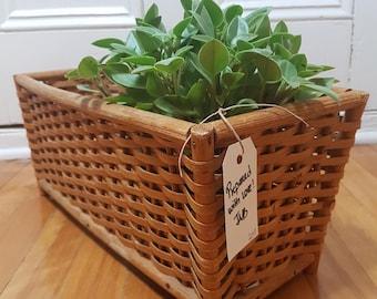 Vintage wicker planter, wicker basket, woven wood organizer, window box, wicker plant holder, wicker and wood planter