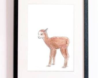 Printable Baby Alpaca Art (Digital Download)