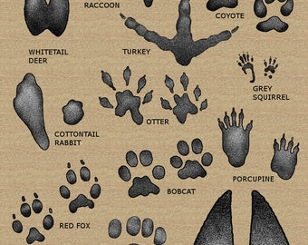 "11"" x 17"" Animal Tracks Field Guide Poster"