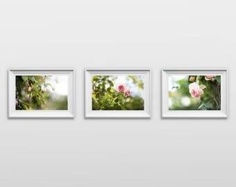 Set of 3: Pink Roses, Original Photography Prints, Landscape, Flowers, Wall Art, Decor