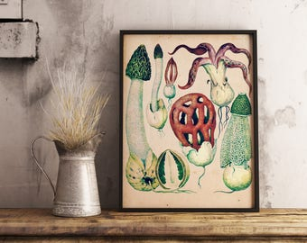 Four Vintage Fungi Prints - Gasteroid Mushrooms and Truffles - Printable Art - Instant Download