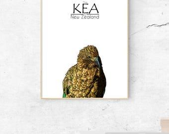 New Zealand Kea print, Stylized Native bird, Travel, Aotearoa, Animals, New Zealand print