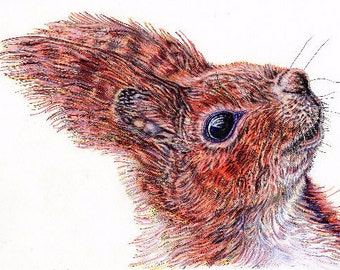Print of an original pen and ink portrait of a red squirrell A4 size