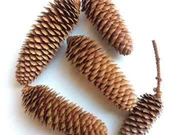 Norway Spruce Cones, Pine Cones, Crafts, Autumn, Christmas, Rustic Decor, Weddings