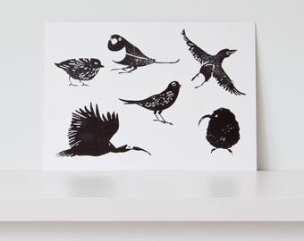 6 strange and rare birds / print