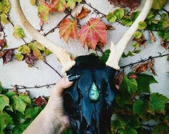 Real Deer Skull | Black Skull with Big Natural Labradorite | Viking Home | Witchcraft | Skullcarving | Altart Tool | Nordic | Animal Totem