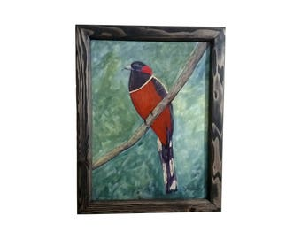 Elegant Trogon with frame