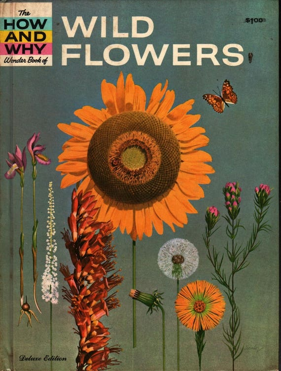 The How and Why Wonder Book of Wildflowers Deluxe Edition - Grace F. Ferguson - Cynthia Iliff & Alvin Koehler - 1962 - Vintage Kids Book