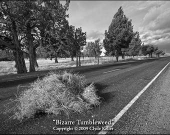 BIZARRE TUMBLEWEED, road obstruction, Clyde Keller photo, 2009