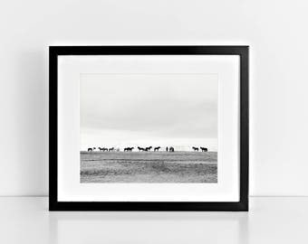 Horse Photography in Black and White   Icelandic Art   Equestrian, PHYSICAL PRINT