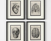 Anatomy Art - Set of 4 - Heart, Chest, Skull, Brain over Vintage Medical Book Pages - Medical Office Decor, Medical Student, Medical Art