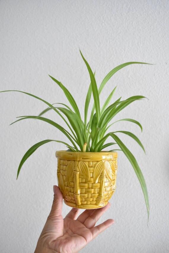 ceramic bamboo style yellow mustard planter vase / small / chinoiserie
