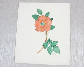 Antique Art Original Watercolor Painting of a Flower By W Russell