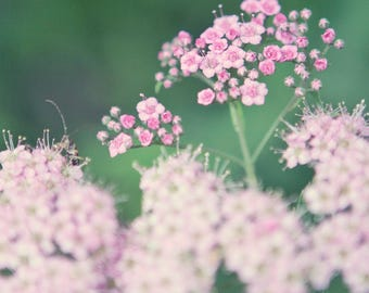 Nature Photography, Pink floral, Travel photography