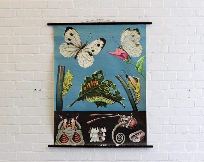 Mid Century Canvas Wall Chart Of The Butterfly Circa 1950s