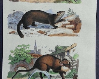 1839: Striped Polecat, Sable, Common Marten Engraving. Antique Hand-colored Print, Guerin. Original. Over 175 years old.
