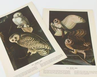 Vintage  Bird - Owl -  Lithograph Print for Gallery Wall - Set of 2 Prints -  1941 Audubon John James