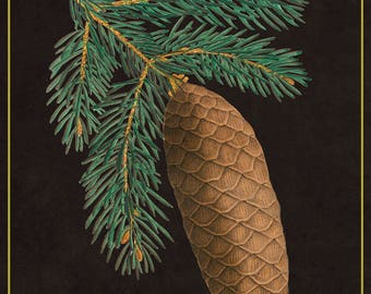 Pine Cone I- Botanical Decor- Botanical Gifts -Botanical Art- Cones- Nature -Vintage -Vintage Prints -Vintage Art -Pinecones -Pinecone -Fir