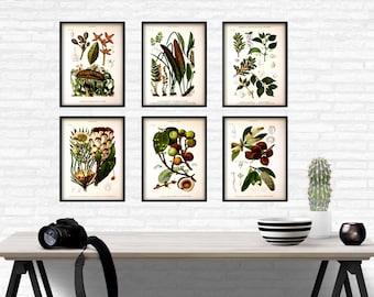 Green plant print set vintage wall art print botanical print SET of 6