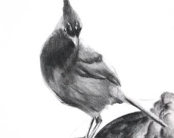 PRETTY LADY- Original Artwork, Stellar Jay, Birds, One of a Kind, Bird Art