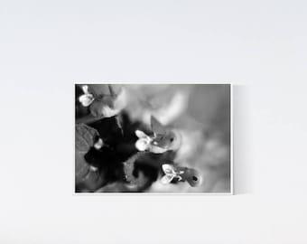 5x7 flower print - Botanical prints - black and white photography - dark artwork, wall art decor, living room art, bedroom, flowers print