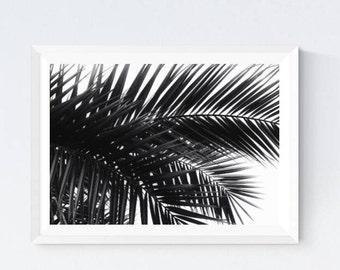 Palm leaves, palm leaf photo, palm tree, palm black and white, palm printable, palm download, palm wall decor, palm room decor, palm digital