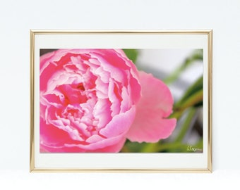 "Original Peony Photo Print ""The Feeling of Pink"" - Home Decor"