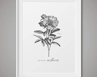 Vintage botanical art print - fig 4