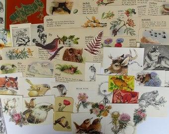 nature and bird themed ephemera for junk journals, smash books, art journals, collage, altered art, gardening, flowers, nature ephemera