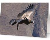 Condor Greetings Cards (P...