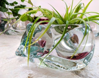A set! Airplant and  Airplant holder, Cat shaped airplant holder, Planter, Glass planter, Cats
