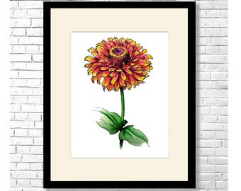 ZINNIA BICOLOR - Red & Yellow Zinnia Flower Watercolor and Ink Art Print Poster Botanical Illustration Wall Decor