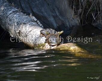 Turtles photo, Instant Download, 10x8, Digital Printable, Fine Art Digital Photo, Photography